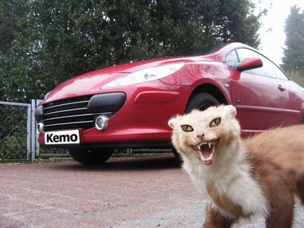 Odstraszacz kun w pojazdach mechanicznych